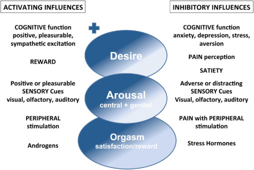 Functions of a Sexual Dysfunction Clinic - International