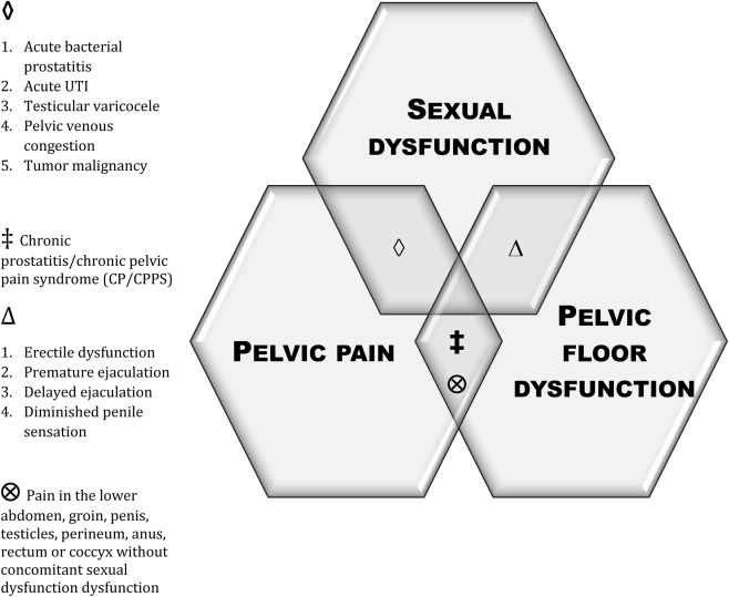 The role of pelvic floor muscles in male sexual dysfunction and 1figure tyukafo